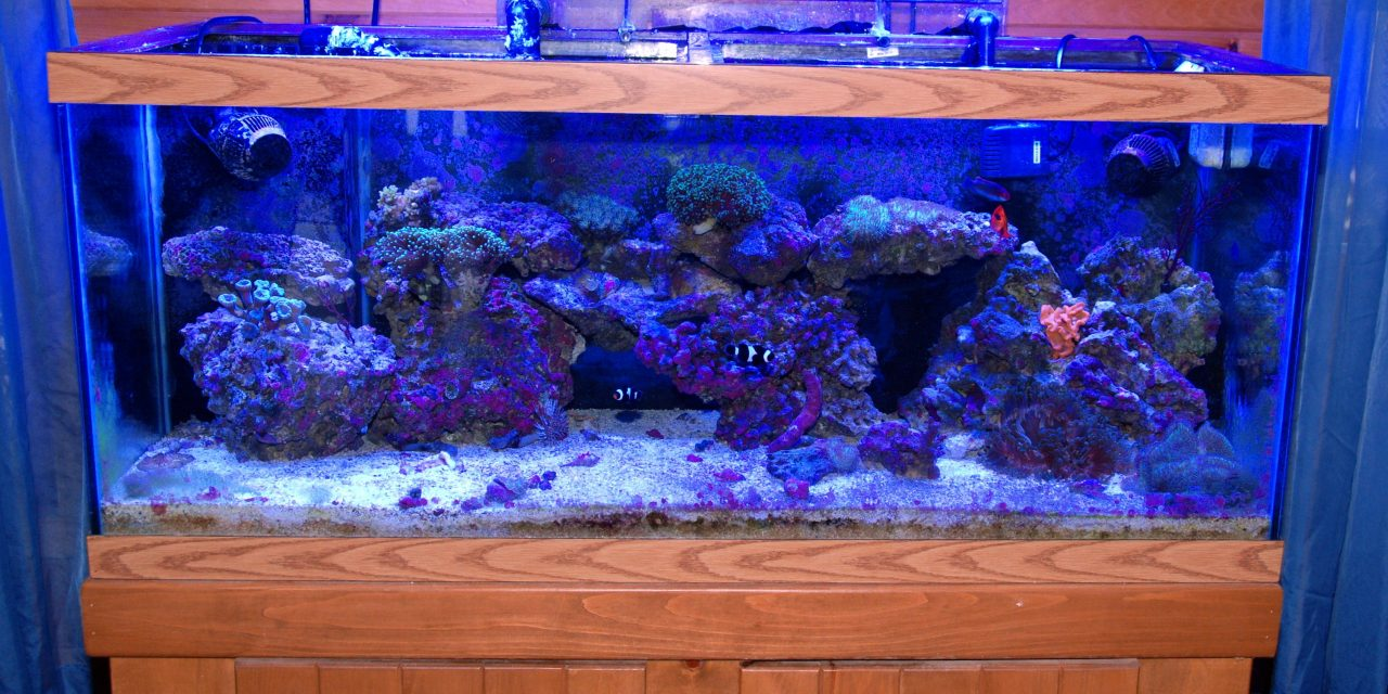 Planning for Your New Saltwater Hobby