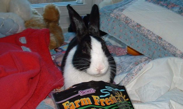Rabbit & Bunny Diet Do's and Don'ts