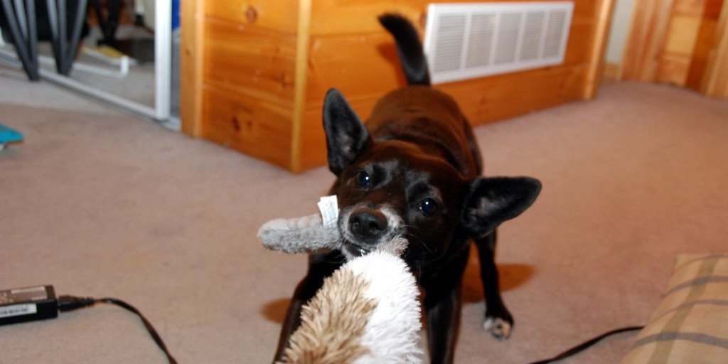 Toy Safety for Dogs and Puppies