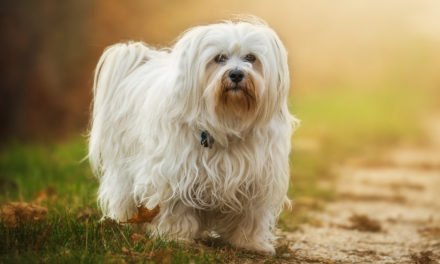 Unique Dog Names: Finding Clever And Unusual Names For Your Dog