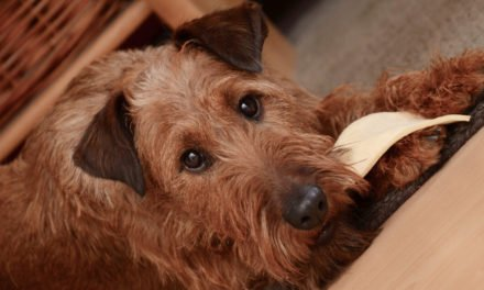 Top 10 Most Dangerous Foods For Dogs