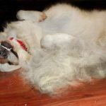 Product Review: FURminator