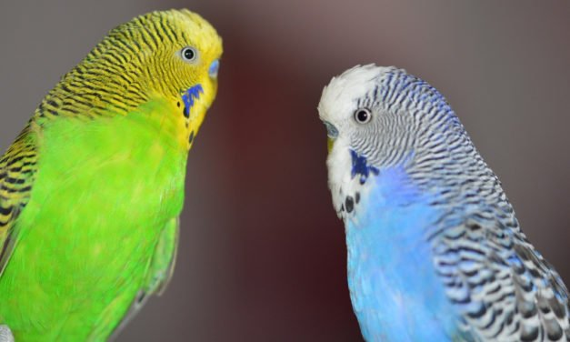 Top Ten Reasons Why Birds Make Good Pets