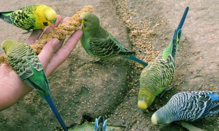 Top 10 Foods Toxic To Pet Birds