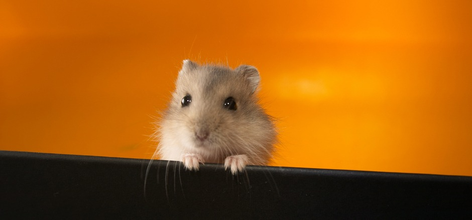 How To Care For A Hamster