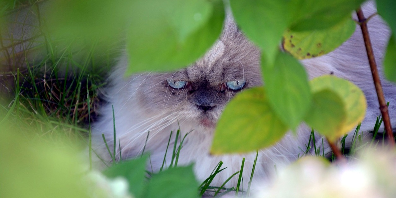 16 Common Plants Poisonous To Cats
