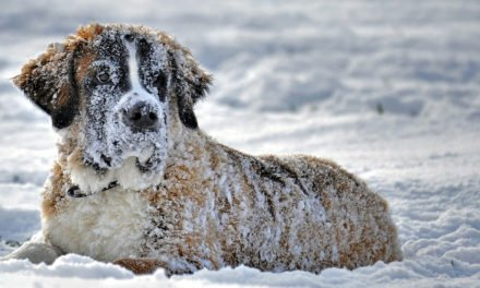 Protect Your Pet From Extreme Cold Weather