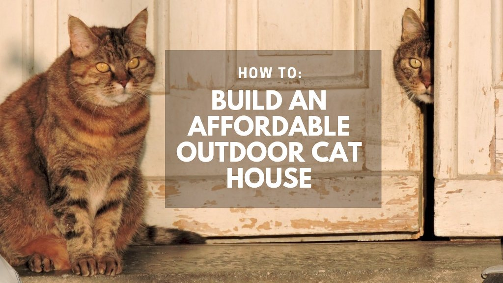Building an Affordable Outdoor Cat House