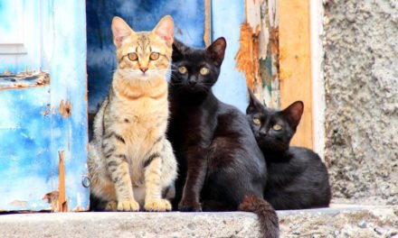 Cat Hoarders – Beware of 'Crazy Cat Ladies'