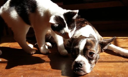 Safe Human Medicines for Dogs and Cats
