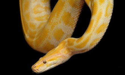 How To Choose A Healthy Pet Snake