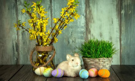 Top 10 Reasons Not to Buy Your Kids a Bunny for Easter