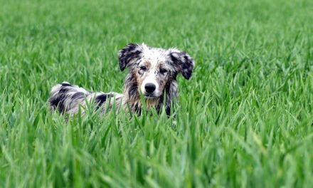 Take Care of Your Dog – Information on Constipation