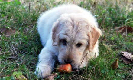 Keep Your Dog Protected from Common Household Hazards