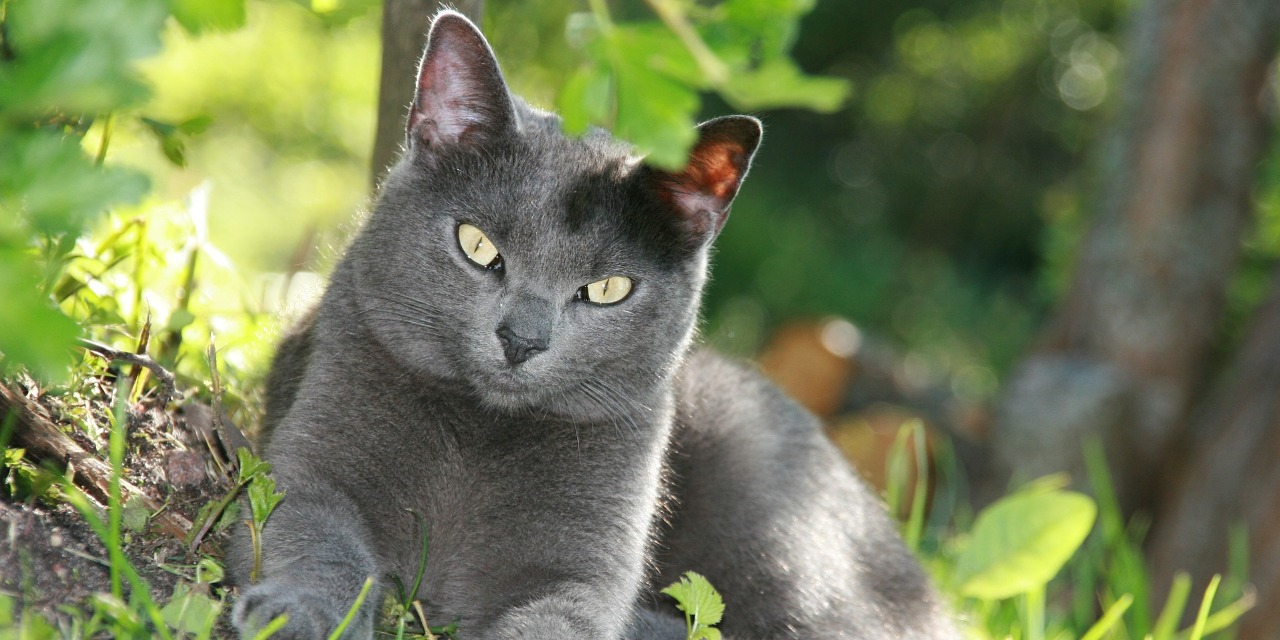 Everything you Need to Know About Feline Hyperthyroidism