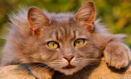 Beginner's Guide to Cat Bladder Cancer