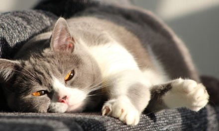 The Truth About Arthritis in Felines