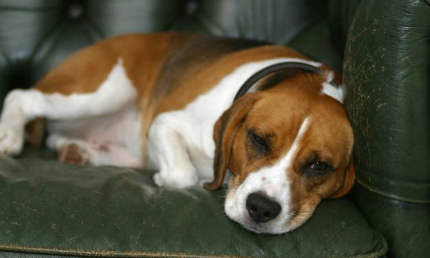 Information on Liver Disease in Canines