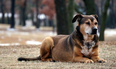 Top 3 Reasons to Get Your Dog Spayed or Neutered