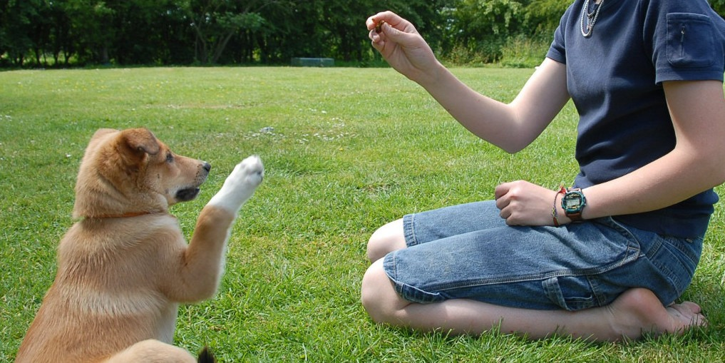 Tips for Basic Dog Training