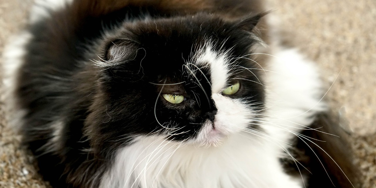 Helpful Tips to Reduce Cat Shedding