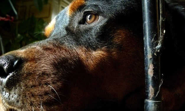 How to Treat Dog Constipation Naturally