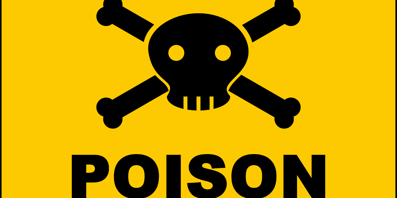 Seven Common Household Items That are Poisonous to Dogs