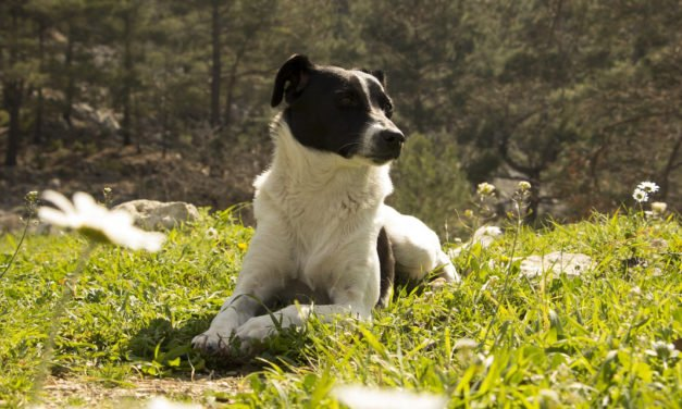 Dog Allergies – Things That can Cause Allergies in Dogs