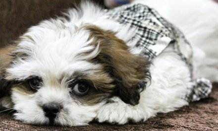 Things to Consider Before Getting a Dog for the First Time