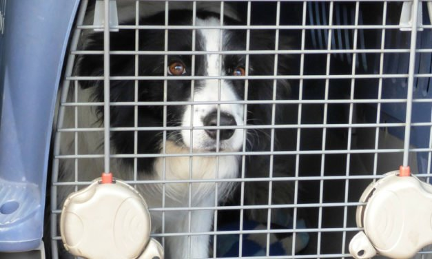 The Benefits of Plastic and Wire Mesh Dog Crates