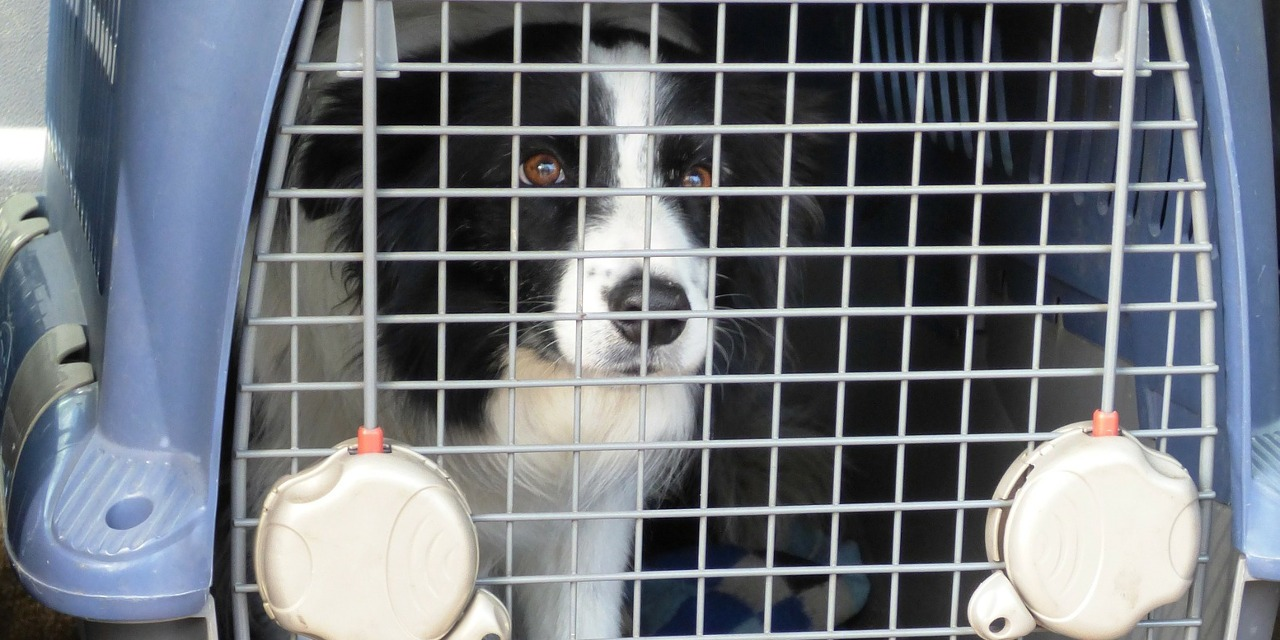 The Benefits of Plastic and Wire Mesh Dog Crates - All Our Paws