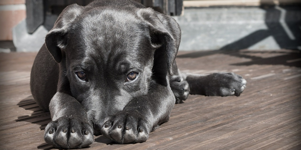 How to Care for Your Carpet During Puppy Potty Training