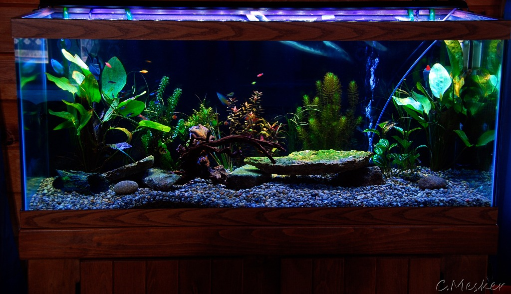 Aquatic nitrogen cycle what you should know before you for Cycling a fish tank