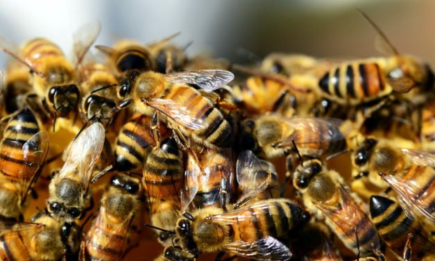 Honey Bees – What to Do if You Find Them Living Around Your House