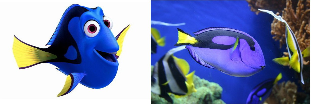 Finding Dory, A Cute Movie with a Possible Devastating After Effect