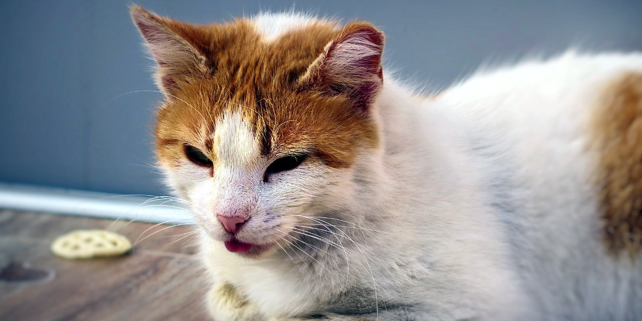 Depression in Cats – Helpful Information About Feline Depression