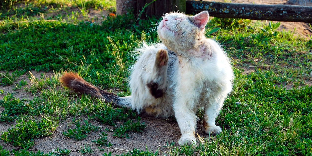 Seven Common Causes of Hair Loss in Cats