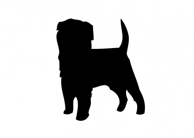 Small Dog Age Calculator