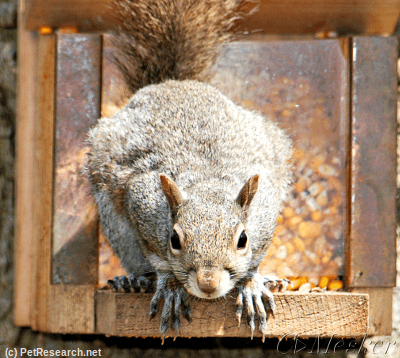 Squirrrel Feeder