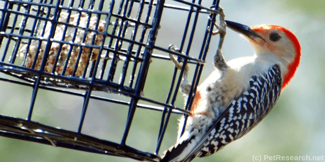 Make Your Own Bird Suet and See the Difference