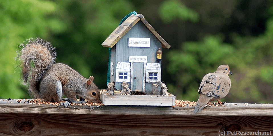 Keeping Squirrels Out of Your Bird Feeders