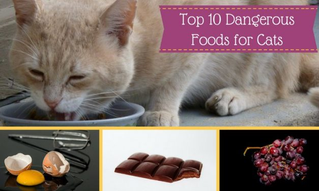 Top 10 Dangerous Cat Foods