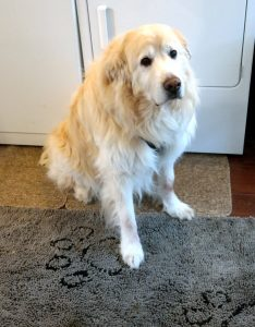 Dirty Dog Door Mat and Great Pyrenees