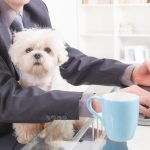 All You Need to Know for Bring Your Dog to Work Day 2017