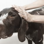 The Ultimate Guide to Grooming Your Dog