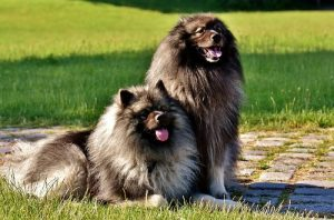 Grooming Long Haired Dog Breeds