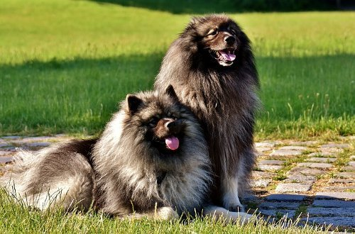 The Ultimate Guide To Grooming Your Dog All Our Paws