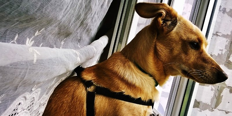 7 Ways to Occupy Your Dog During Rainy Summer Days
