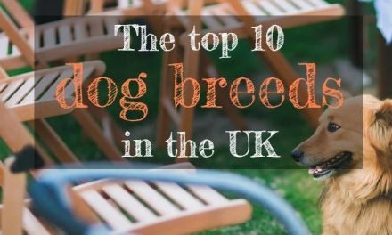 The Top 10 Dog Breeds in the UK