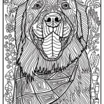 Golden Retriever Coloring Page